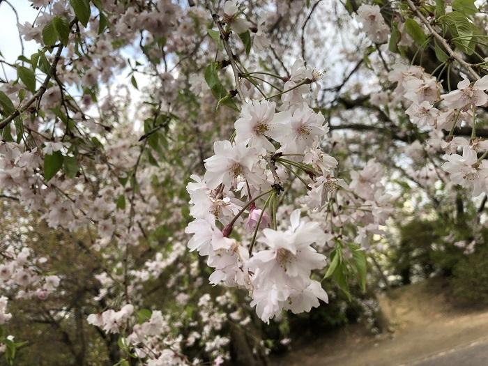 「iPhone 8」で撮影した環境別の写真〇連発!