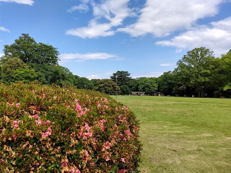 AQUOS R3のカメラで撮影さた公園