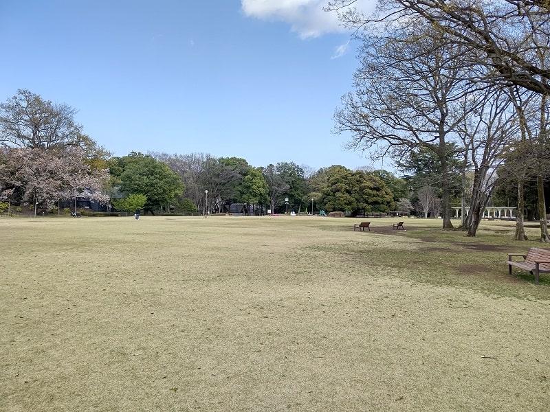 AQUOS R5G のカメラで撮影した公園