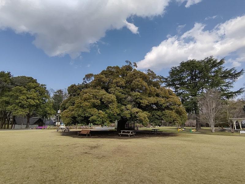 AQUOS R5Gで撮影した風景