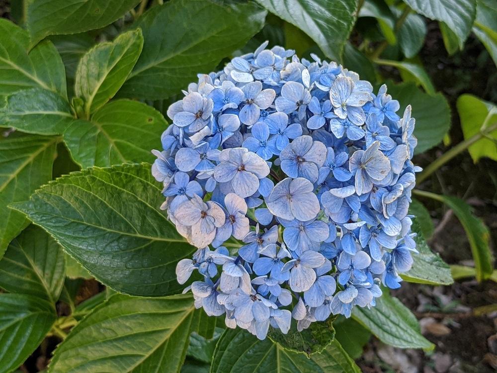 Pixel 4a のカメラで撮影した花